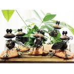 カエルの演奏オブジェ カエル雑貨 楽器雑貨 カエルの置物 カエルの楽団 楽器のオブジェ  ※メール便非対応商品