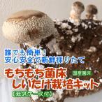 しいたけ栽培キット もちもち菌床椎茸 【栽培ケース付】 ご家庭で椎茸栽培 誰でも簡単 安心安全で新鮮 インドアファーム