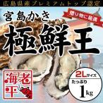 ショッピング広島 広島産 宮島かき「極鮮王」特大2Lサイズ(1kg)│かき カキ 牡蠣