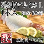 福岡・長崎産 ヤリイカ冷凍 Lサイズ1本|いか 烏賊