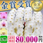 生産直売の胡蝶蘭を全国送料無料でお届けします。