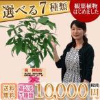 観葉植物10,000円(税別)開店祝・開院祝 インテリアに