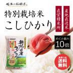 新米 お米 5kg 新潟産コシヒカリ 特別栽培米 白米 5kg 平成29年産 送料無料 (北海道四国九州へは追加送料400円)