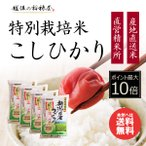 細山 特別栽培米新潟産こしひかり 白米  10Kg