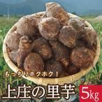 予約販売開始!毎年大人気!「上庄の里芋5kg」 越前大野 福井特産 上田農園