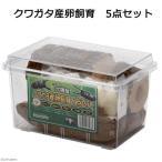 MIKU 日本製クワガタ産卵飼育セット