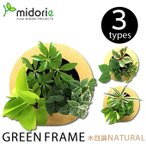 グリーンフレーム 木目調ナチュラル (フレーム・ピン・取説・BOX) / ミドリエフレーム・ラウンド型 midorie 壁掛け 観葉植物 グリーン 壁 室内 土を使わない