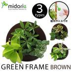 グリーンフレーム ブラウン(フレーム・ピン・取説・BOX・ボトル) / ミドリエフレーム・ラウンド型 midorie 室内 土を使わない インテリア 額 フレーム
