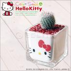 カラーサンド de ハローキティ Hello kitty ミニサボテン カラーサンドアート
