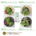 ミドリエデザイン 木目調グリーン フレーム15 +給水ボトル付