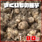 菊芋の種芋