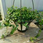 観葉植物 送料無料 おまけがついてくる観葉植物 幸福 ガジュマル インテリア ランプ型 インテリア プレゼント