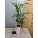 観葉植物 おまけがついてくる 観葉植物 アレカヤシ 送料無料 空気浄化 おまけ インテリア