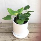 観葉植物 送料無料 おまけがついてくる ハートファン 陶器鉢 観葉植物 珍しい インテリア プレゼント ハート かわいい