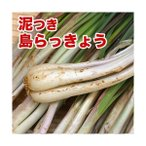 島らっきょう沖縄県産(100g) 量り売り♪500g以上購入で100gオマケ! 旬の島らっきょう!お試し 沖縄野菜(らっきょう 生 国産)  根菜 天ぷら 漬物|野