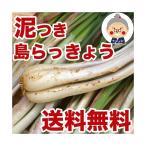 島らっきょう沖縄県産(1kg) 送料無料!2kgご購入で更に200gオマケ!天ぷらや漬物、ビールのお供に美味しい島らっきょうをお取り寄せ|野菜|