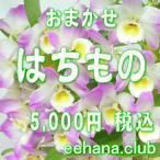 おまかせ鉢物 はちもの・花鉢・グループプランツ5,000円  お祝い・お供え・ビジネス