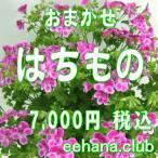 おまかせ鉢物 はちもの・花鉢・グループプランツ7,000円  お祝い・お供え・ビジネス