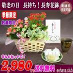秋限定販売 中津川 栗きんとん  +花鉢セットでなんと 2,980円 送料無料