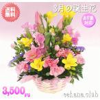 花 ギフト バースデー3月の誕生花 ピンクアレンジ3,500円 送料無料  花言葉付き  フリージア   あすつく対応