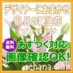 花 ギフト バースデー11月の誕生花 デザイナーにおまかせ5,000円 送料無料   フラワーアレンジ・花束