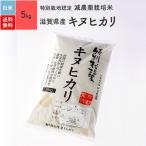 米 お米 5kg キヌヒカリ 滋賀県産 特別栽培米 白米 令和元年産