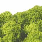ノルディックモス 50g 165-51820-77 FL820−770 ライトグリーン 花材 手芸 リース 土台 ベース アレンジ 材料 苔 松K直送
