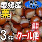 クール便 愛媛の栗 生栗 秀品 Lサイズ 3kg 送料無料