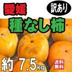 愛媛産 種なし柿(刀根柿) 約7.5kg(送料無料)