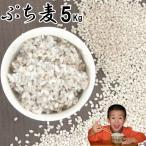 ぷち麦 5Kg | 無農薬 大麦 福岡県産 筑後久保農園