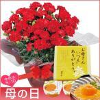 母の日 花 赤カーネーション鉢植えとまるごとみかんゼリーのセット 5号鉢 スイーツ プレゼント 贈り物 ギフト 数量限定 送料無料