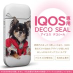 iQOS アイコス 専用スキンシール 裏表2枚セット カバー ケース ステッカー デコ アクセサリー デザイン おしゃれ 犬 チワワ 写真 005221