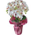 コチョウラン 5本立て(造花) ホワイト SG-6045(18-0065-654)