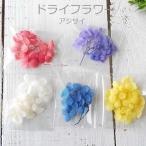 ドライフラワー アジサイ 選べる5色(レッド・パープル・ホワイト・ブルー・イエロー)【ゆうパケット対応】
