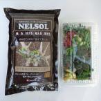 観葉植物 / 多肉植物切り芽(カット芽)10芽入りパッケージと固まる土(ネルソル)1リットル入りのセット