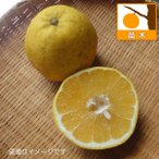 果樹の苗/かわちばんかん(河内晩柑)4.5号ポット