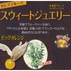 野菜の苗/食用ホオズキ:スウィートジュエリービッグオレンジ3号ポット 2株セット