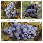 果樹の苗/ブルーベリー:サザンハイブッシュ系人気種5号3種セット(オニール・ケープフェアー・ミスティー)
