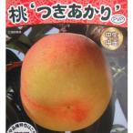 Yahoo!園芸ネット果樹の苗/棚卸セール モモ(桃):つきあかり4〜5号ポット