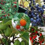 果樹の苗/里山の果樹5種セット*(山葡萄・夏グミ・クコ・サルナシ・カジイチゴ)