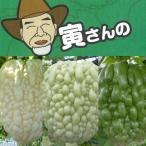 野菜の苗/寅さんのアップルゴーヤ3号ポット3種セット(白秀・青秀・緑秀)
