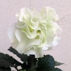 草花の苗/八重咲きパンジー:フェアリーチュール ドレスデン11cmポット