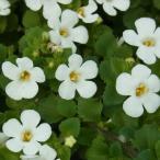 草花の苗/バコパ:スコーピア・スノーホワイト3号ポット