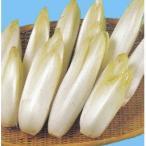 7イタリアで人気の高級野菜! 野菜タネ 5・7月まき チコリ F1ポルシェOGの種