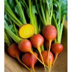 野菜タネ ビーツ:サフランイエローの種