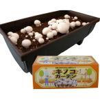 野菜の苗 / キノコガーデン(ホワイトマッシュルーム栽培キット)