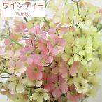 草花の苗/サクラソウ:ウインティーピーチ3.5号ポット 2株セット