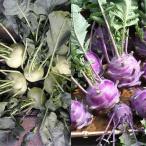 コールラビの種:白と紫の2色セット 野菜タネ