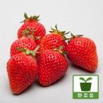野菜の苗/イチゴ:あかねっこ(あかねっ娘)3号ポット 3株セット
