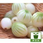 野菜の苗/ペコロスたまねぎ3号ポット 2株セット